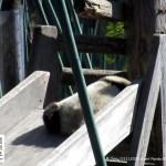 Panda-Kindergarten
