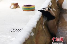 Fu Feng