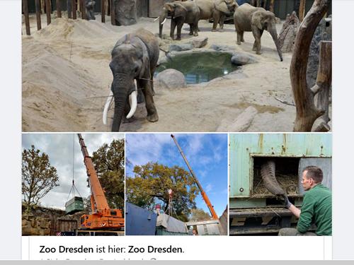 Tembo Abreise aus Dresden