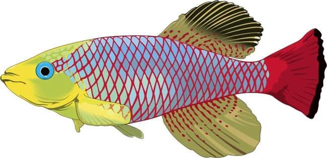 Рыбы, аквариумные рыбки, клипарт, клипарты животные рыбы, clipart aquarium fish, скачать клипарт, бесплатные клипарты, коллекция