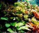 acvarii2.jpg