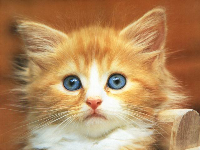 pisica2.JPG