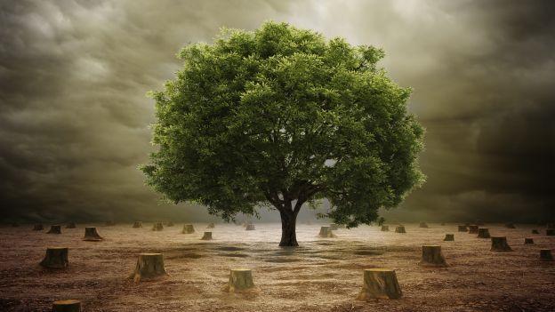 Stop alla deforestazione nella Selous Game Reserve!