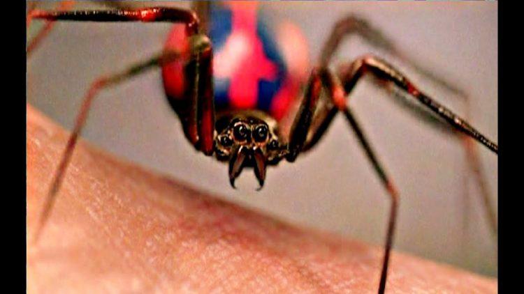 spider-biter