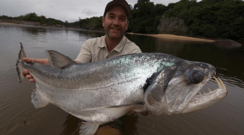 """Alla scoperta dei pesci più pericolosi e spaventosi: su Alpha arriva """"Monster Fish"""""""
