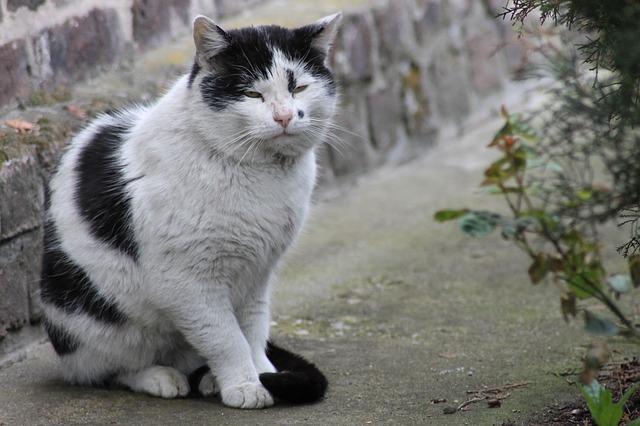 comment s occuper d un chat senior blog