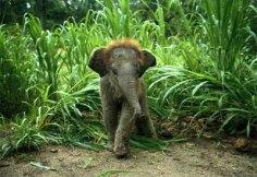 elefantino-baby-asiatico