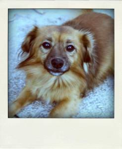 il-mio-cagnolino-effetto-polaroid