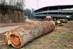Abattage des arbres proches du stade Grimonprez