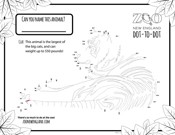Zoo New England Dot To Dots