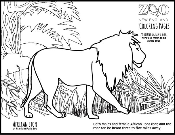 zoo new england  coloring pages