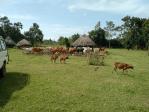 Zoonoses in Livestock in Kenya – The Beginnings of Surveillance