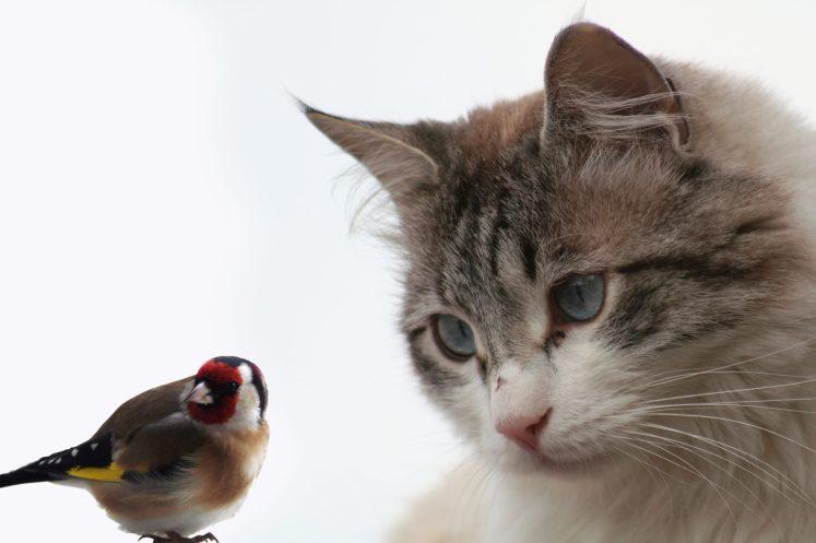 نتيجة بحث الصور عن cat&  bird