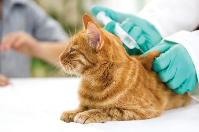 Katzen Impfen Lassen Welche Impfungen Sind Notwendig
