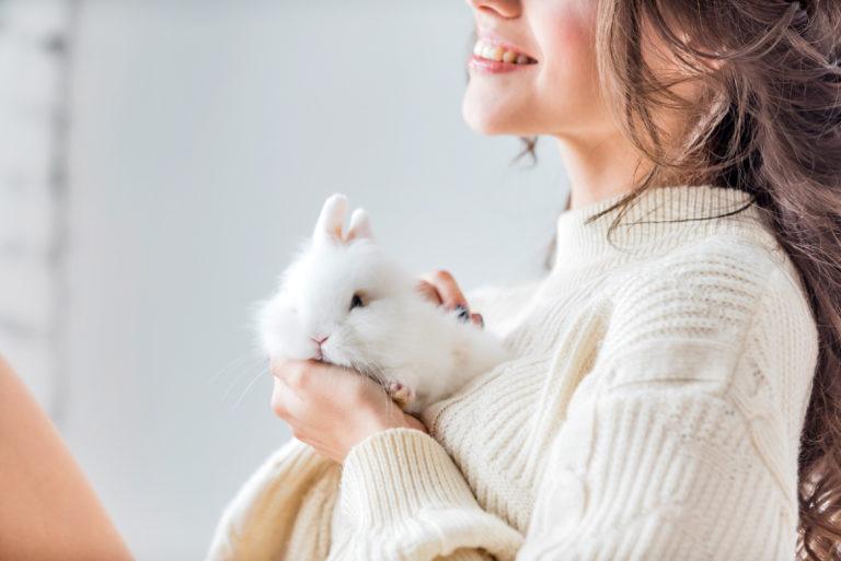 s occuper d un lapin nain conseils et
