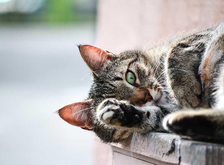 Hilfe Bei Wurmbefall Bei Katzen Zooroyal Magazin