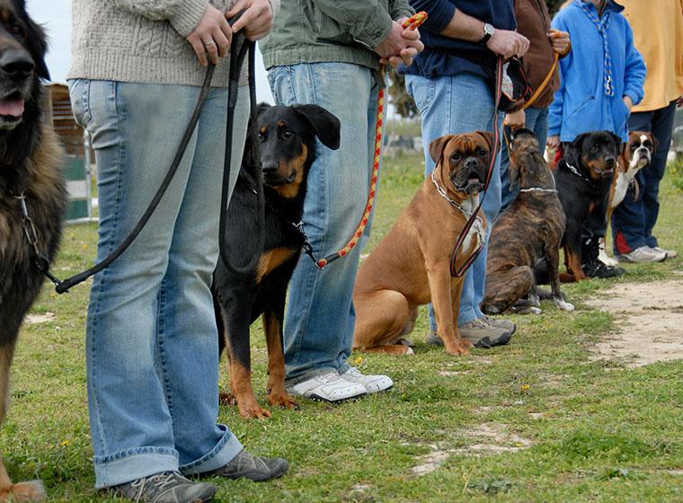 Die 1225 Besten Bilder Zu Hundeschule In 2020 Hunde Hundeschule