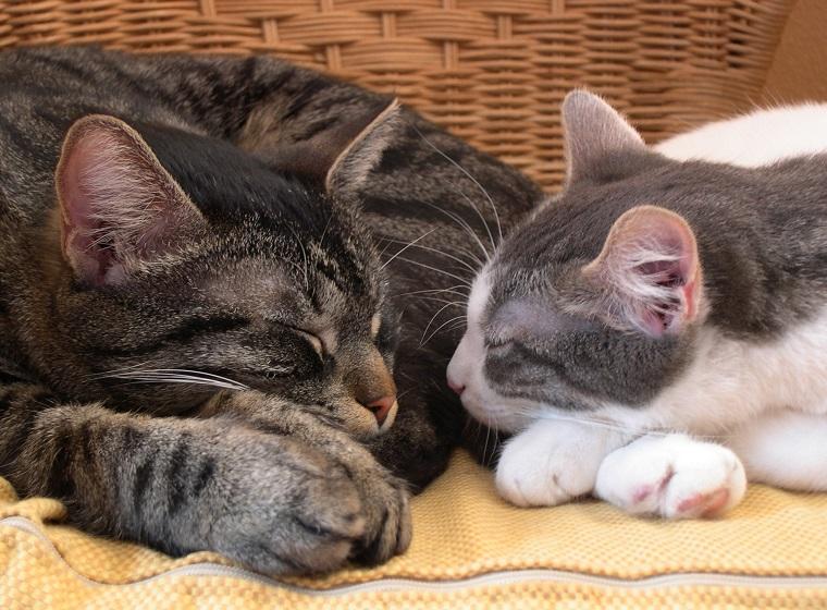 Katzen Zusammen Halten Probleme Im Mehrkatzenhaushalt