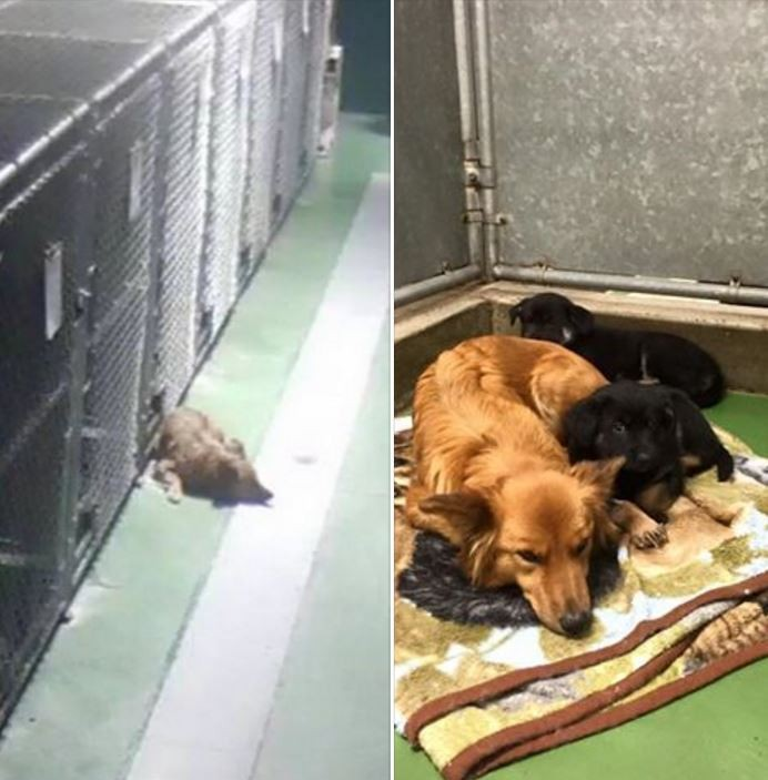 maggie adopta perritos 1