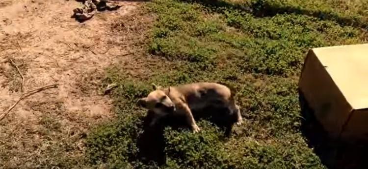 rescate-perro-caja-de-carton2