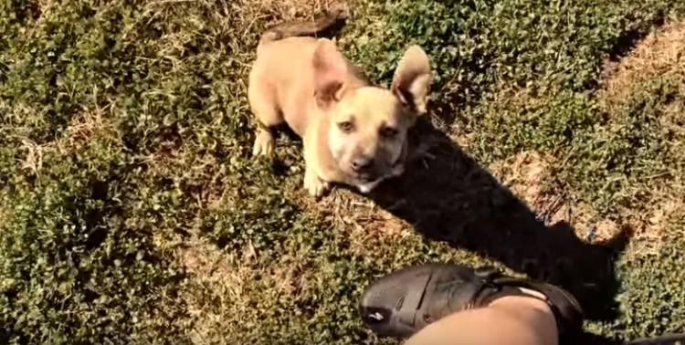 rescate-perro-caja-de-carton5