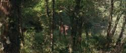 Virginie Ledoyen nude topless bush skinny dipping and Aitana Sanchez-Gijon nude bush - Bosque de sombras (2006) hd720p (5)