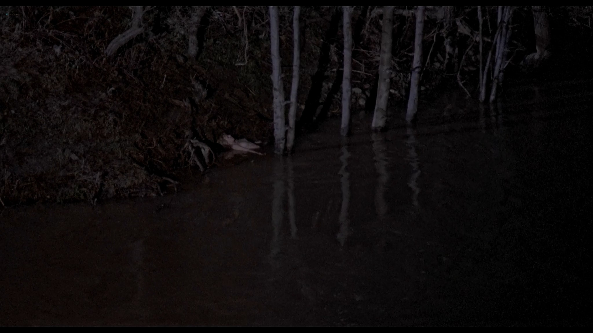 Danyi Deats nude bush topless but dead Rivers Edge 1986 HD 1080p BluRay 2
