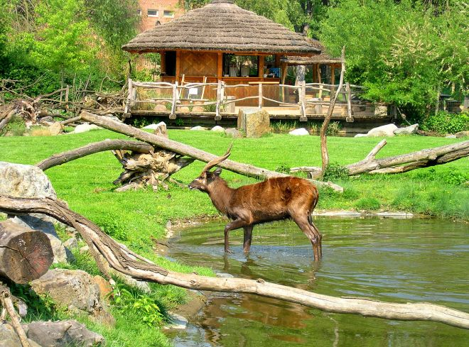 A savana do Zoo Praha | Foto: Wikimedia