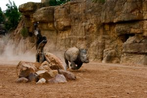 Os 10 melhores zoológicos da Europa
