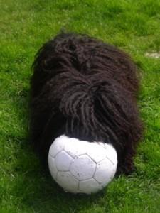 Unsere Moha spielt gerne Ball