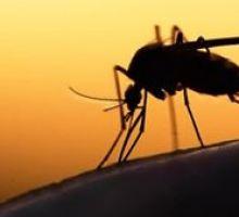 Κρήτη: Πρόγραμμα καταπολέμησης κουνουπιών στο Ηράκλειο