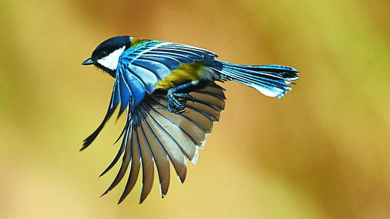 Αυστραλία: Ομογενής θεραπεύει τα ψυχολογικά προβλήματα των... πτηνών