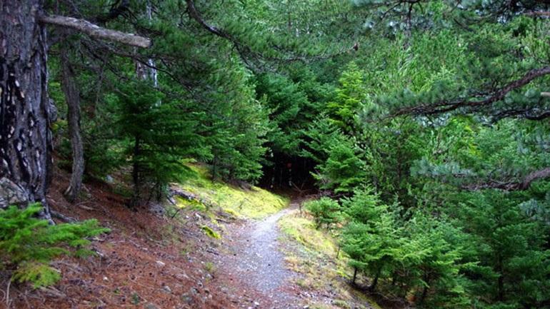 Απαγόρευση κυκλοφορίας στα δάση της Μεσσηνίας