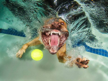 underwater-photos-of-dogs-fetching-their-balls-by-seth-casteel-1