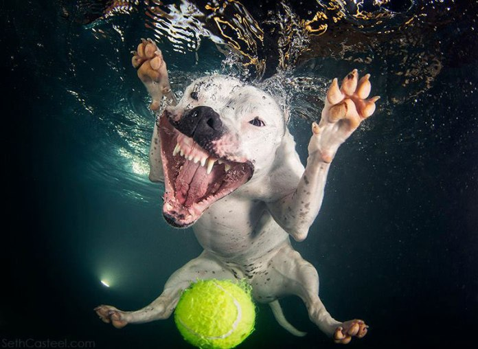 underwater-photos-of-dogs-fetching-their-balls-by-seth-casteel-10