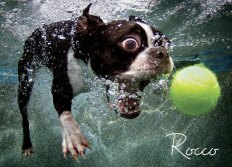 underwater-photos-of-dogs-fetching-their-balls-by-seth-casteel-5