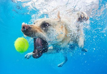 underwater-photos-of-dogs-fetching-their-balls-by-seth-casteel-9