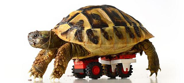 tortoise-lego-wheelchair-carsten-plischke-thumb640