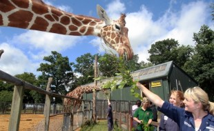 Feeding giraffes as part of the Keeper for a Day experience