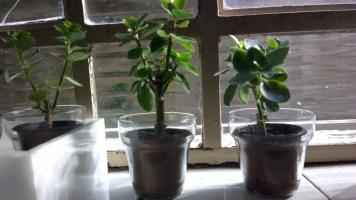 plantinhas em modo PureView