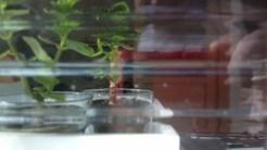 A mesma planta, do outro lado do vidro