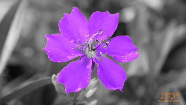 Fuji_xt1_filtro_Selec_Purple2