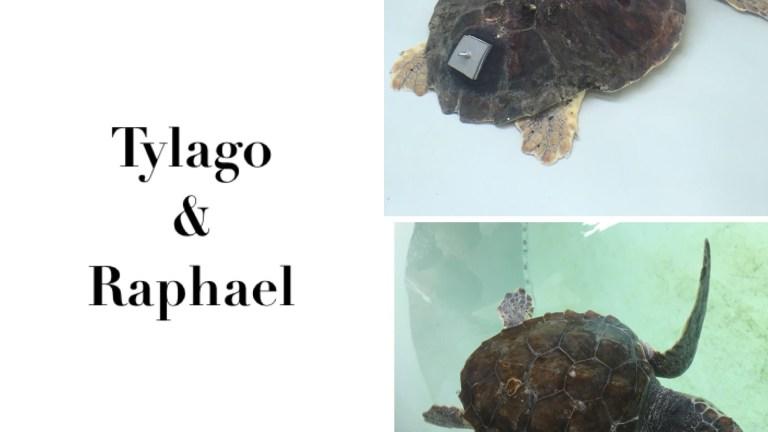 L'acquario di Pula ed il centro di recupero per le tartarughe
