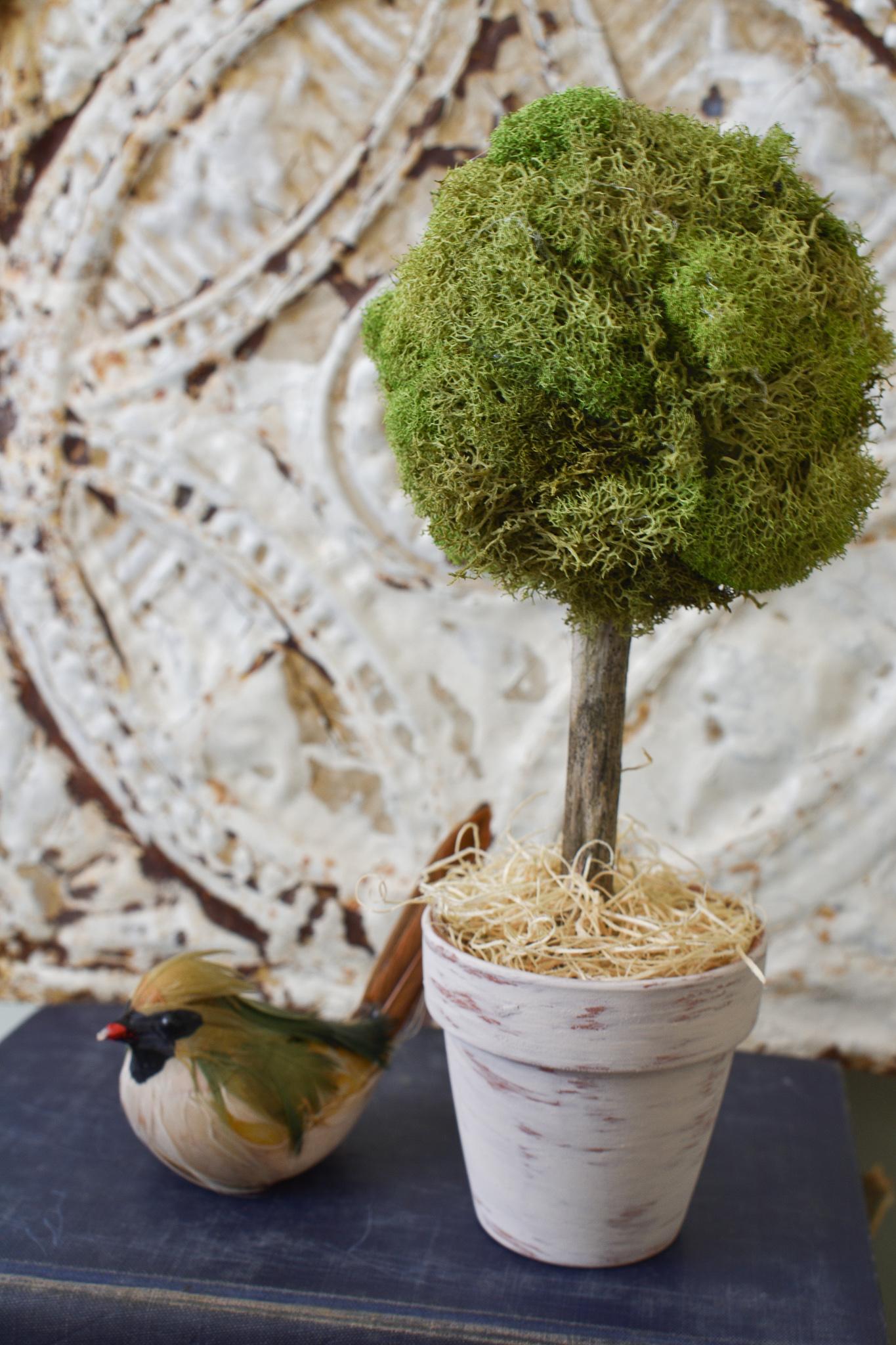 Farmhouse style DIY mini moss topiary tree