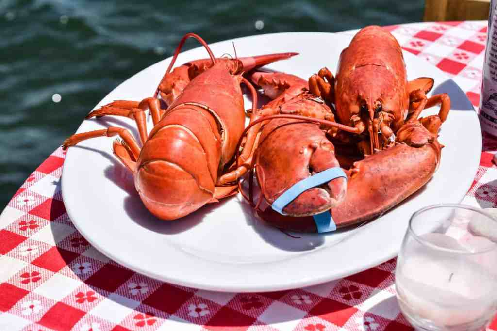 two red steamed lobsters on a white platter