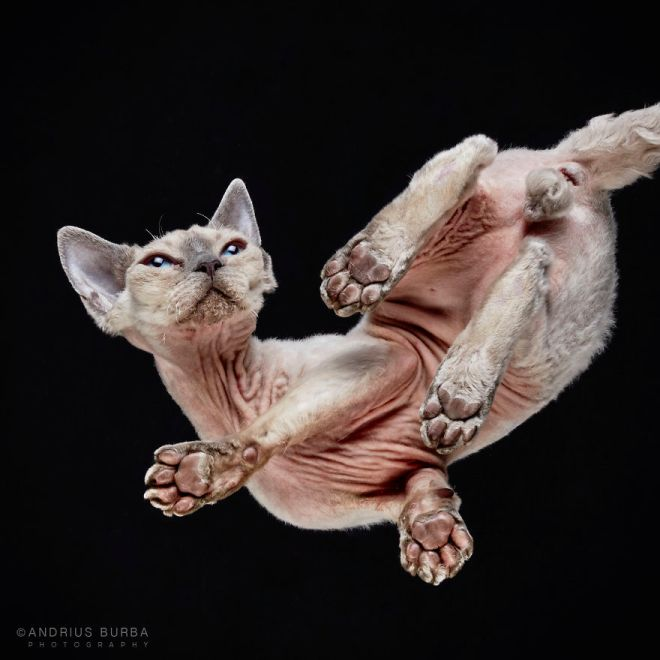 25-photos-of-cats-taken-from-underneath-2__880
