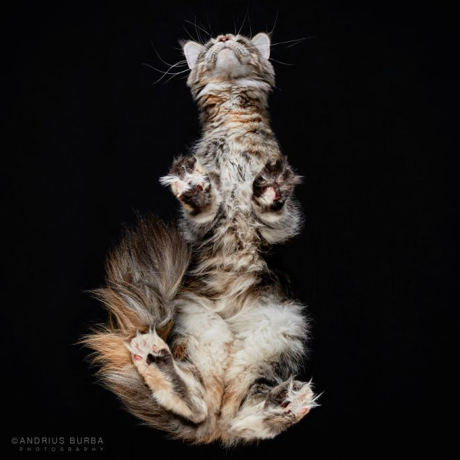 25-photos-of-cats-taken-from-underneath-6__880