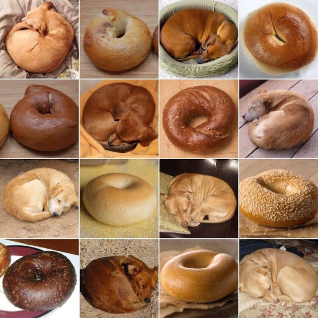 Puppy or Bagel