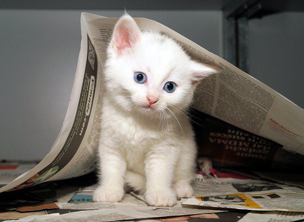 Wilt u een kitten