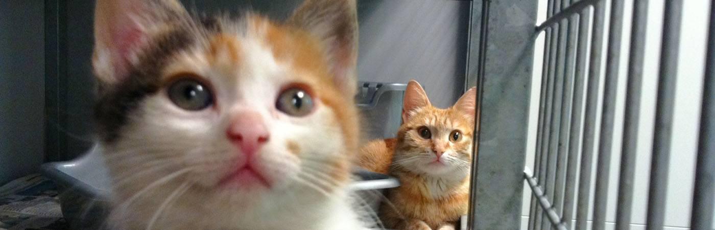 Moederpoes met haar kitten in de zwerfkattenopvang in Rotterdam